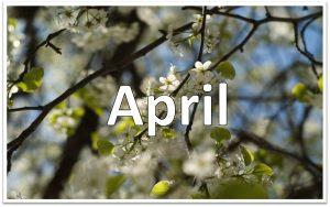 4月度 ♪各種レクチャー開講スケジュール♪